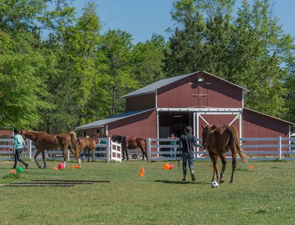 Volunteers participating in our partner program lead horses through ground exercises in the arena.