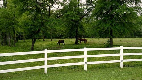 Two horses grazing in a shady green pasture.